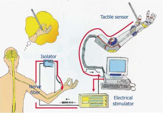 触覚神経インタフェース概念図